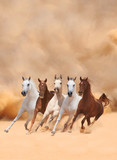 Horses in dust - 59021295