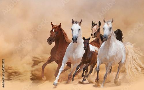 Horses in dust - 59021292