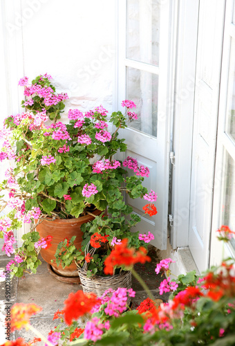 Pots of geraniums on terrace in Greece