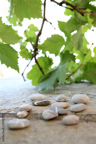Still life of stones and branch of vine leaves