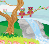 sweet owls in spring scenery
