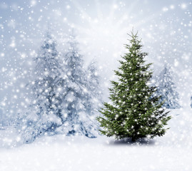 Christbaum im Schnee