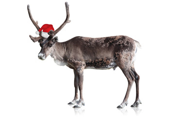 Freigestelltes Rentier mit Weihnachtsmütze