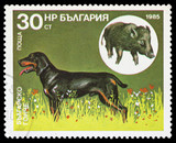 Bulgaria - CIRCA 1985: stamp printed by Bulgaria, shows a huntin
