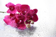 Beautiful orchids with drops