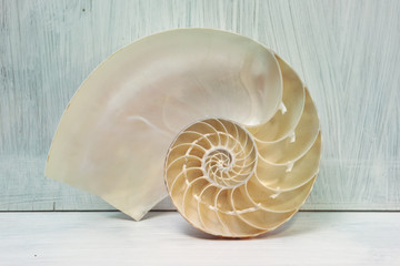 nautilus cross section