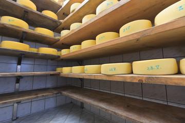 Cheese maturing on the shelves in the farm cellar, Slovenia