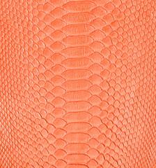 orange snake skin