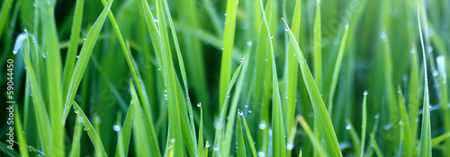 Green grass with morning dew