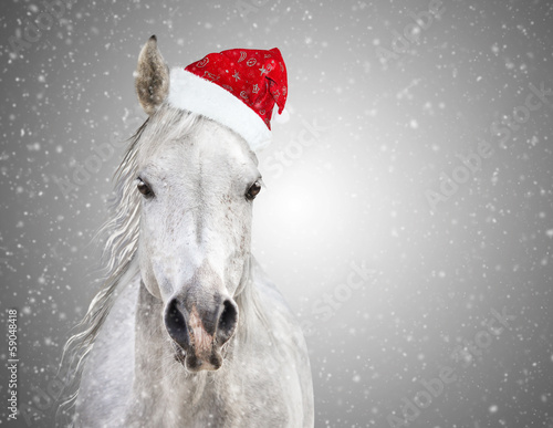 Papiers peints Porter White christmas horse with santa hat on gray background snowfall