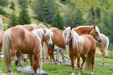 Cavalli in Val Sarentino
