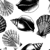 Hand drawn seamless pattern with sea shell isolated on white.