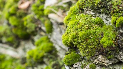 Moos auf Felswand