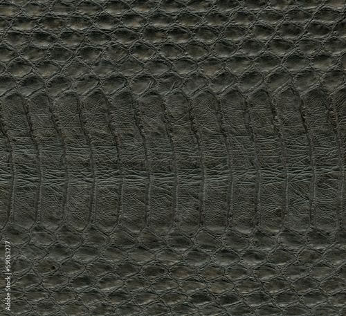 natural  snake skin close up