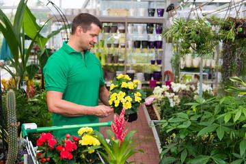 kunde sucht nach pflanzen im fachgeschäft