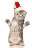 Funny cat in Santa Christmas hat