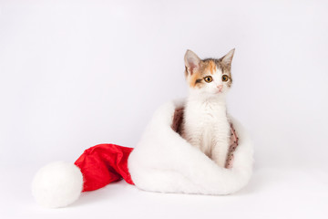 kitten in a santa hat.
