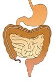 cartoon image of digestive system