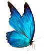 butterfly macro background