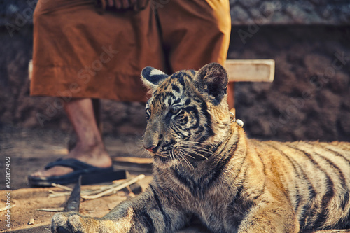 Tiger Cub with Monk