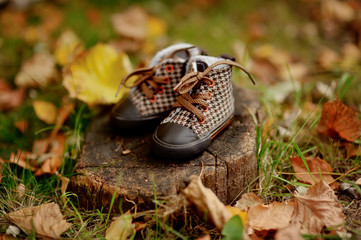 autumn in the park of grass and foliage stump with baby shoes