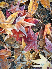 Frozen Leaves In Fall