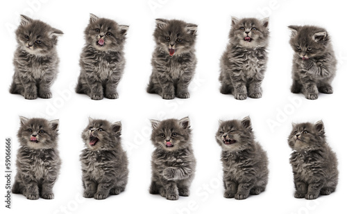 Funny kitten Variations on the white background