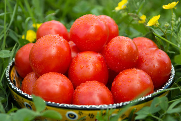 Fresh tomatoes in a bowl on the grass
