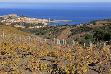 Collioure, vignes en terrasse - automne.