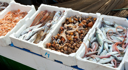 Fresh fish for sale at the harbor