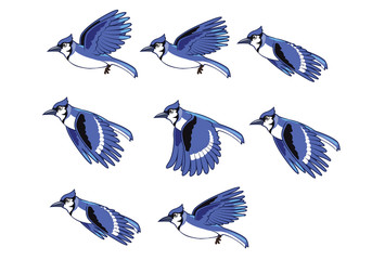 Blue Jay Bird Flying Animation Sprite