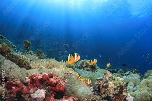 Coral reef with anemones and clownfish