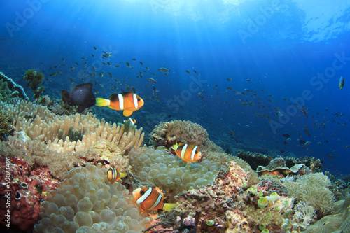Underwater reef with Clownfish and Anemones