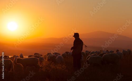 Shepherd - 59079298