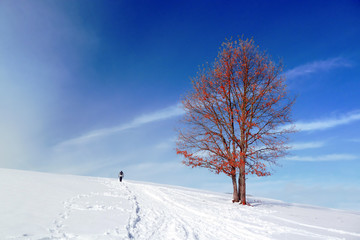 winter landscape with solitary tree and person walking