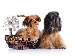 Decorative doggies with a basket and a bow.