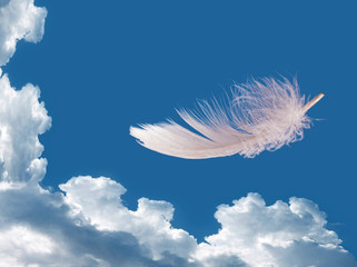 Floating feather over sky - lightness, freedom concept