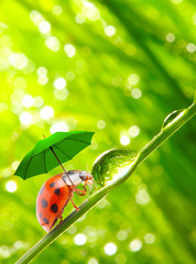 Little ladybug with umbrella.