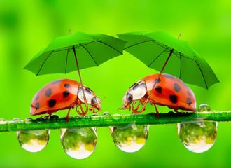 Little ladybugs with umbrella.