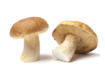 Two Boletus Edulis Mashroom