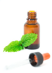 Lemon balm (Melissa Officials) essential oil isolated.