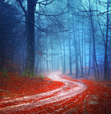 Magic forest road
