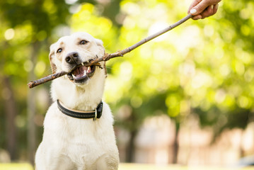 Mixed breed dog chewing a stick