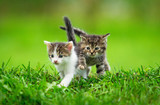 Two little kittens on the grass - 59098499