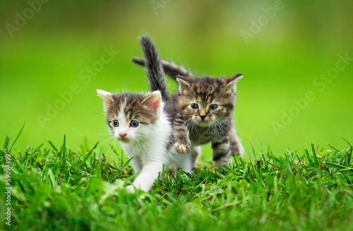 Two little kittens on the grass