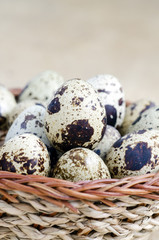The basket filled with eggs of quails