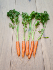 Arangment of Freshly Harvested Carrots
