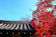 日本の瓦屋根と紅葉