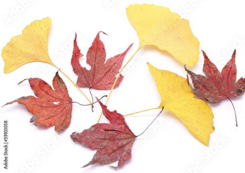 イチョウとカエデの落ち葉