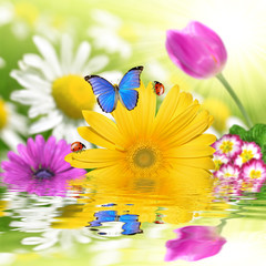 floral background with butterfly and ladybug